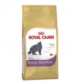 Kedi British Shorthair 400 gr