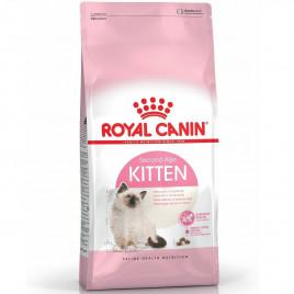 4 kg Kitten