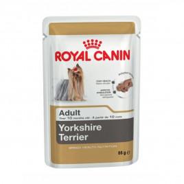 85 Gr Yorkshire Terrier Adult