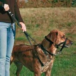 Uzman Köpek Eğitim Tasması S 22 Cm