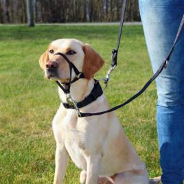 Uzman Köpek Eğitim Tasması Xl 46 Cm