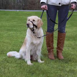 Uzman Köpek Eğitim Tasması Xl-Kısa 40 Cm